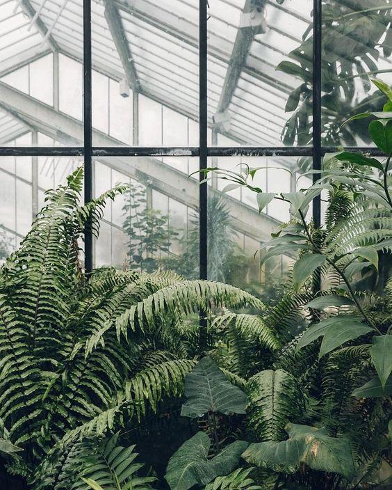 interieur-interior-green interior-groene oase-serre-greenhouse-planten-plants