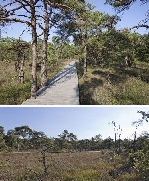 public space-publieke ruimte-landscape-landschap-heide-zwevend pad hout