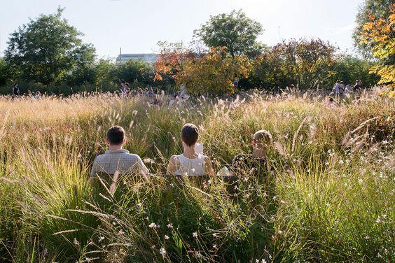 public space-publieke ruimte-landschap-landscape-grassen