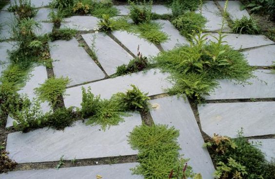 tuin-garden-flagstones-groene voegen
