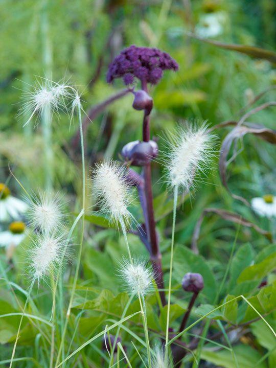 tuin-garden-plants-planten