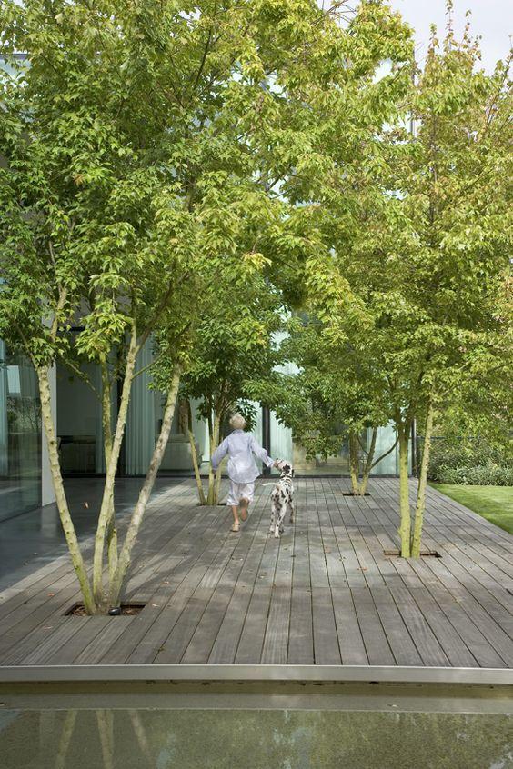 tuin-garden-terrace wood-houten terras-vijver-meerstammige